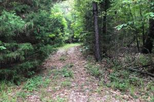 137 ac Hunting / Timber Tract near Big Black River in Montgomery, MS (12 of 41)