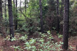 137 ac Hunting / Timber Tract near Big Black River in Montgomery, MS (20 of 41)