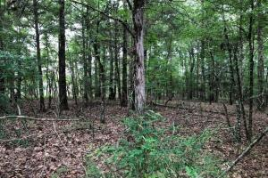 137 ac Hunting / Timber Tract near Big Black River in Montgomery, MS (6 of 41)
