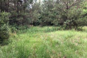 137 ac Hunting / Timber Tract near Big Black River in Montgomery, MS (2 of 41)