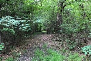 137 ac Hunting / Timber Tract near Big Black River in Montgomery, MS (28 of 41)