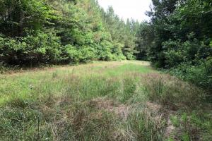 137 ac Hunting / Timber Tract near Big Black River in Montgomery, MS (25 of 41)