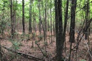 137 ac Hunting / Timber Tract near Big Black River in Montgomery, MS (31 of 41)