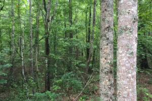 Bald Rock Mountain Tract with Lodge in Saint Clair, AL (20 of 22)