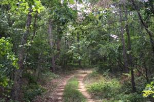 Bald Rock Mountain Tract with Lodge in Saint Clair, AL (18 of 22)