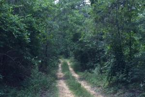 Bald Rock Mountain Tract with Lodge in Saint Clair, AL (15 of 22)