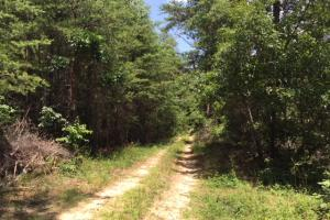 Bald Rock Mountain Tract with Lodge in Saint Clair, AL (16 of 22)