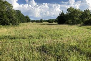 Starkville 75 Acre Pasture Land - Oktibbeha County MS