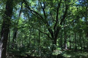 Yemassee Small Wooded Parcel - Hampton County SC