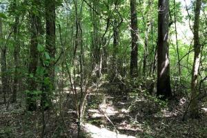 20 acres Hunting & Timber Tract near Grenada Lake in Grenada, MS (9 of 18)