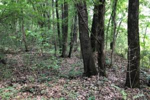 20 acres Hunting & Timber Tract near Grenada Lake - Grenada County MS