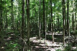 20 acres Hunting & Timber Tract near Grenada Lake in Grenada, MS (5 of 18)