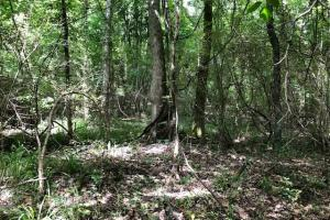 20 acres Hunting & Timber Tract near Grenada Lake in Grenada, MS (8 of 18)
