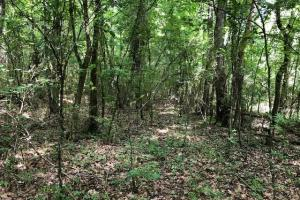 20 acres Hunting & Timber Tract near Grenada Lake in Grenada, MS (12 of 18)