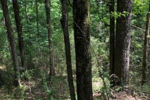 20 acres Hunting & Timber Tract near Grenada Lake in Grenada, MS (2 of 18)