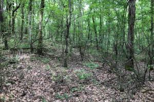 20 acres Hunting & Timber Tract near Grenada Lake in Grenada, MS (11 of 18)