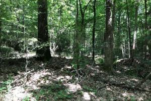 20 acres Hunting & Timber Tract near Grenada Lake in Grenada, MS (15 of 18)