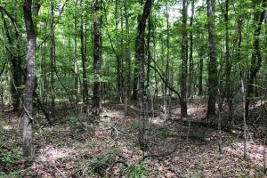 20 acres Hunting & Timber Tract near Grenada Lake in Grenada, MS (16 of 18)