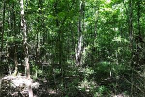 20 acres Hunting & Timber Tract near Grenada Lake in Grenada, MS (6 of 18)