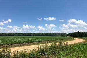 County Road 178 Farmland and Timber Investment - Calhoun County MS