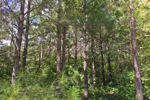 Autaugaville Hunting and Timber Investment - Autauga County AL