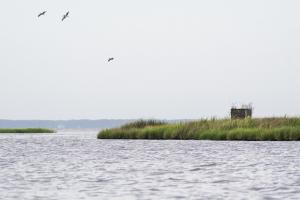 Lukens Island  in Carteret, NC (57 of 93)
