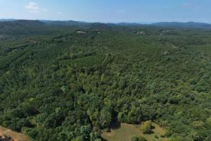 South Mountain Hunting and Timber Tract - Burke County, NC
