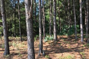 Box Creek Hunting and Timber Investment - Pickens County AL