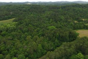 Dandridge Wooded Land Tract - Jefferson County TN