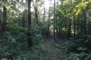 Shoal Creek Road Timber Hunting & Homesite Tract in Saint Clair, AL (22 of 29)