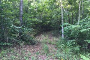 Shoal Creek Road Timber Hunting & Homesite Tract in Saint Clair, AL (20 of 29)
