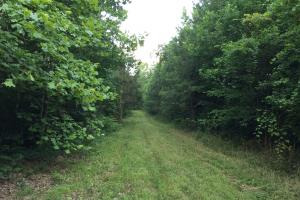 Shoal Creek Road Timber Hunting & Homesite Tract in Saint Clair, AL (18 of 29)