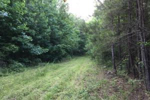 Shoal Creek Road Timber Hunting & Homesite Tract in Saint Clair, AL (23 of 29)