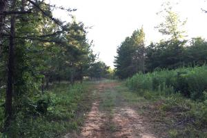 Shoal Creek Road Timber Hunting & Homesite Tract in Saint Clair, AL (21 of 29)