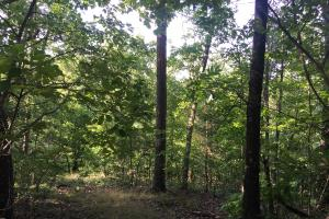 Shoal Creek Road Timber Hunting & Homesite Tract in Saint Clair, AL (10 of 29)