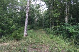 Shoal Creek Road Timber Hunting & Homesite Tract in Saint Clair, AL (11 of 29)