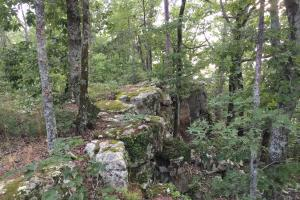 Shoal Creek Road Timber Hunting & Homesite Tract in Saint Clair, AL (12 of 29)