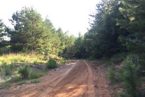 Shoal Creek Road Timber Hunting & Homesite Tract in Saint Clair, AL (5 of 29)