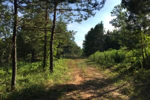 Shoal Creek Road Timber Hunting & Homesite Tract in Saint Clair, AL (6 of 29)