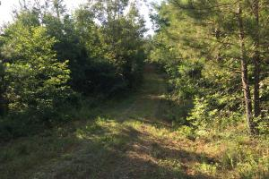 Shoal Creek Road Timber Hunting & Homesite Tract in Saint Clair, AL (8 of 29)