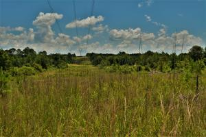 Jay Branch Timber Investment and Hunting Tract - Fayette County AL