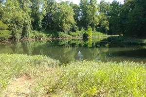 1,140 Acres Ducks, Deer, Turkey, Hogs on the Saline River - Saline County AR