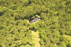 41 Acre Hunting/Recreational Tract in Polk, TX (13 of 13)