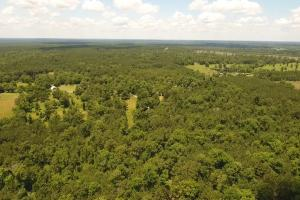 41 Acre Ranch/ Homesite - Polk County TX