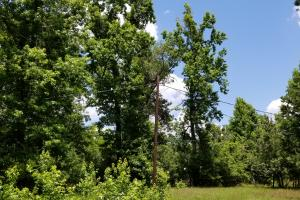 41 Acre Hunting/Recreational Tract in Polk, TX (9 of 13)