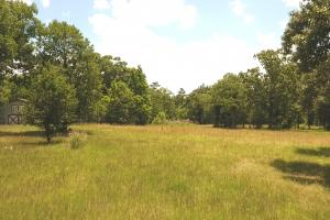 41 Acre Hunting/Recreational Tract in Polk, TX (5 of 13)