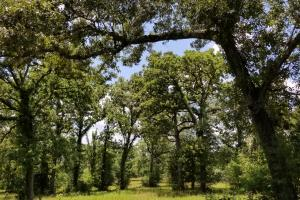 41 Acre Hunting/Recreational Tract in Polk, TX (10 of 13)