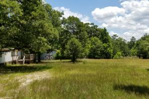 41 Acre Hunting/Recreational Tract in Polk, TX (6 of 13)