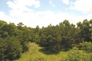 41 Acre Hunting/Recreational Tract in Polk, TX (2 of 13)