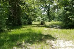 41 Acre Hunting/Recreational Tract in Polk, TX (12 of 13)
